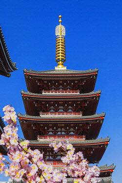 TPX70407 Japan, Honshu, Tokyo, Asakusa, Sensoji Temple, Five-story Pagoda and Cherry Blossom