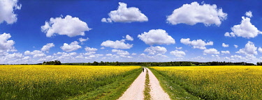 IBXRUM03891460 Hiker on a dirt track, bright rape fields and white clouds against a blue sky, near Erkertshofen, Titting, Altmühltal Nature Park, Bavaria, Germany, Europe