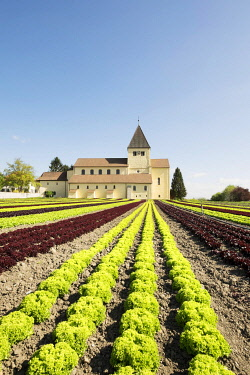 IBXMKL03894398 Lettuce field, the Church of Saint George at the back, Reichenau Island, Baden-Württemberg, Germany, Europe