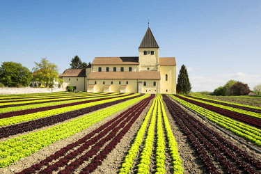 IBXMKL03894399 Lettuce field, the Church of Saint George at the back, Reichenau Island, Baden-Württemberg, Germany, Europe