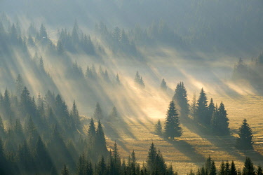 IBXMAN04825995 Sun rays shine in the forest through fog, sunrise, view from Curevac, Durmitor National Park, Zabljak Province, Montenegro, Europe