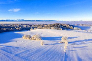 IBXMAN04881371 Winter landscape, forest area with alpine chain, near Münsing, Fünfseenland, drone shot, alpine foothills, Upper Bavaria, Bavaria, Germany, Europe