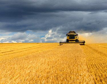 IBXKCV04891623 Combine harvester in cornfield harvests Barley (Hordeum vulgare), dark cloudy sky, Saalekreis, Saxony-Anhalt, Germany, Europe