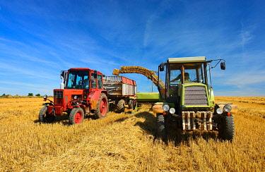 IBXKCV04891626 Bale press unloads straw bales on tractor trailer, stubble field under blue sky, at Alsleben, Saxony-Anhalt, Germany, Europe