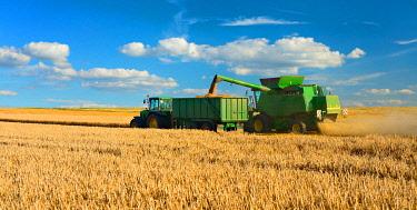 IBXKCV04891632 Combine harvester in cornfield harvests Barley (Hordeum vulgare), grain is unloaded onto tractor trailer, field under blue sky with cumulus clouds, Saalekreis, Saxony-Anhalt, Germany, Europe