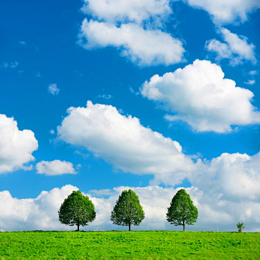 IBXKCV04889454 Cultural landscape in spring, three small lime trees on a green meadow, blue sky with cumulus clouds, Burgenlandkreis, Saxony-Anhalt, Germany, Europe