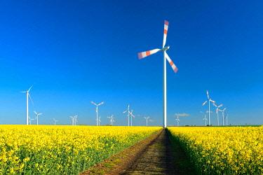 IBXKCV04889851 Wind turbines behind blooming rape field, blue sky, Saxony-Anhalt, Germany, Europe