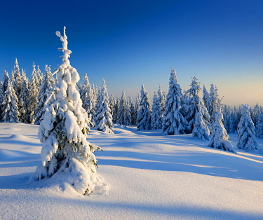 IBXAVI04892189 Snow-covered winter landscape, snow-covered spruces, Harz National Park, Saxony-Anhalt, Germany, Europe