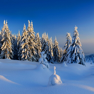 IBXAVI04892223 Snow-covered winter landscape, snow-covered spruces, Harz National Park, Saxony-Anhalt, Germany, Europe