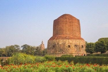 IN08487 India, Uttar Pradesh, Sarnarth, near Varanasi, Dhamekh Stupa and ruins complex, The Stupa marks the spot where Bhuddha preached his first sermon