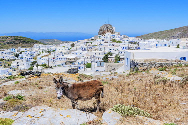 GRE1743AW High angle view of Chora, Amorgos, Cyclades Islands, Greece
