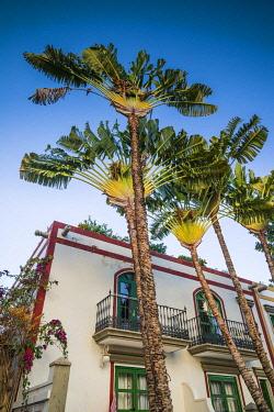 ES09445 Spain, Canary Islands, Gran Canaria Island, Puerto de Mogan, fan palm