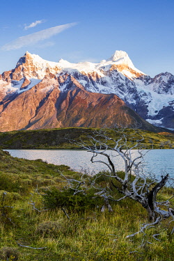 CLKFM110978 Chile, Patagonia, Magallanes and the Chilean region of Antarctica, Ultima Esperanza provinces, Torres del Paine National Park, Cerro Paine Grande with burned trees in the foreground at dawn