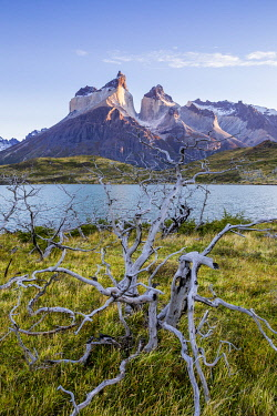 CLKFM110980 Chile, Patagonia, Magallanes and the Chilean region of Antarctica, Ultima Esperanza provinces, Torres del Paine National Park, Paine Horns with burned trees in the foreground at dawn