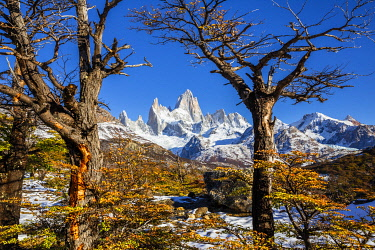 CLKFM112214 Argentina,Patagonia,Santa Cruz Province,Los Glaciares National Park,trees with autumn colors frame Mount Fitz Roy