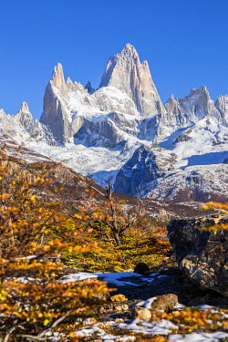 CLKFM112215 Argentina,Patagonia,Santa Cruz Province,Los Glaciares National Park,trees with autumn colors and Mount Fitz Roy