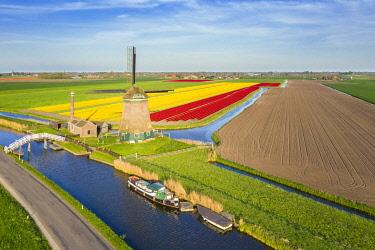 CLKGP109817 The De Kaagmolen windmill in front multicolor tulips field (Opmeer municipality, North Holland, Netherlands