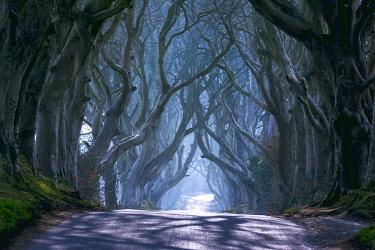 CLKMR101753 UK, Northern Ireland, County Antrim, Ballymoney, The Dark Hedges
