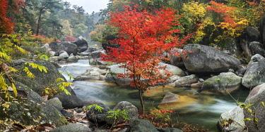 JAP1841AW Shosenkyo Gorge National Park near Kofu city, Yamanashi Prefecture, Japan