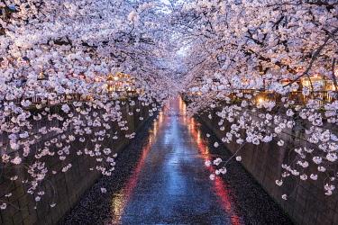 JAP1903AW Sakura festival in Nakameguro, Tokyo, Honshu, Japan