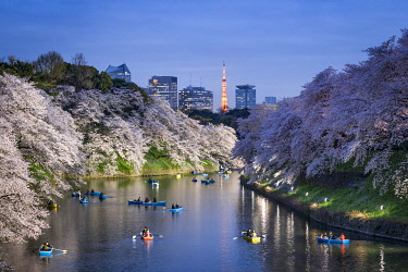 JAP1904AW Chidorigafuchi light up event during the cherry blossom season, Tokyo, Japan