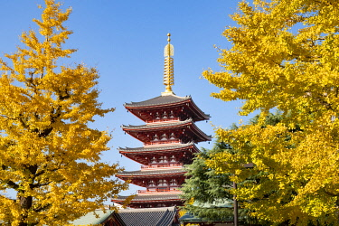 JAP1948AW Senso-ji buddhist temple in autumn with yellow Gingko trees, Asakusa, Tokyo, Japan