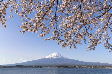 JAP1966AW Mount Fuji near Lake Kawaguchiko during cherry blossom season, Yamanashi Prefecture, Japan Fuji near Lake Kawaguchiko during cherry blossom season, Yamanashi Prefecture, Japan