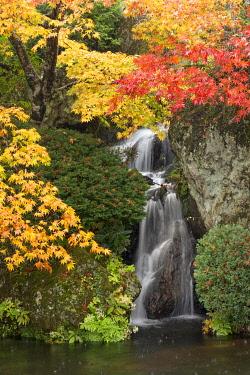 JAP2015AW Autumn colors at the garden of the Hakone Museum of Art, Gora, Hakone, Kanagawa Prefecture, Japan