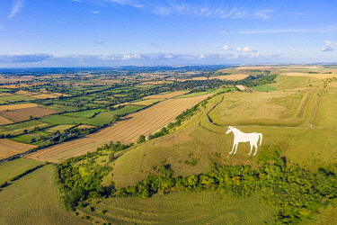 UK08579 Aerial view of the famous White Horse below Bratton Camp, an Iron Age hillfort near Westbury, Wiltshire, England