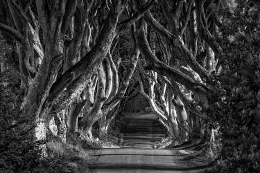 NIR8936AW Dark Hedges, Northern Ireland