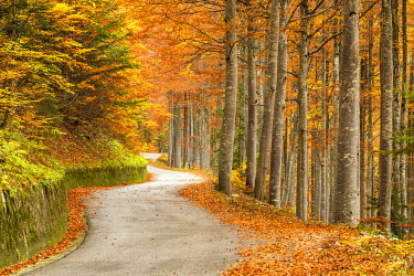 SLV1501AW Windy Road Through Forest in Autumn, Triglav National Park, Slovenia