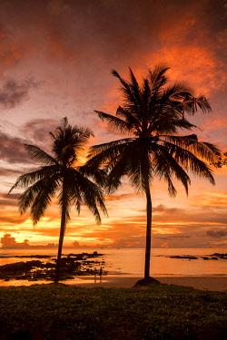 THA1429AW Palm Trees at Sunset, Khao Lak, Phang-nga, Thailand, Asia