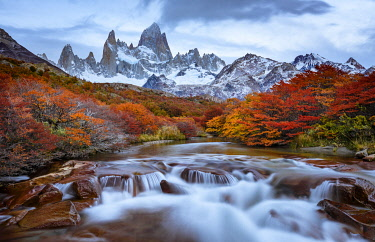 SA01YCH0008 Argentina, Los Glaciares National Park. Mt. Fitz Roy and Lenga beech trees in fall.
