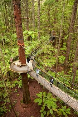 AU03DWA0655 Tourists on Redwoods Treewalk at The Redwoods (Whakarewarewa Forest), Rotorua, North Island, New Zealand