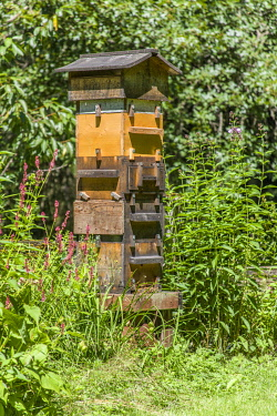 US48JHO1268 Snoqualmie, Washington State, USA. A Warre hive is a vertical top bar hive that uses bars instead of frames, usually with a wooden wedge or guide on the bars from which the bees build their own comb....
