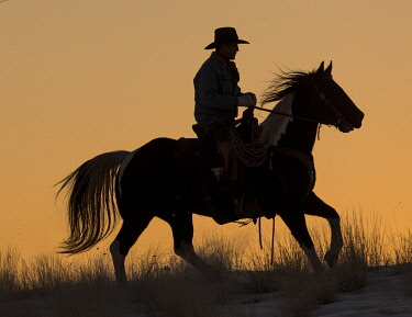 US51DGU0299 Horse drive in winter on Hideout Ranch, Shell, Wyoming. Cowboy riding his horse winters snow silhouetted at sunset. MR (MR)