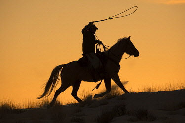 US51DGU0206 Cowboy horse drive on Hideout Ranch, Shell, Wyoming. Cowboy riding his horse with rope out silhouetted at sunset. (MR)