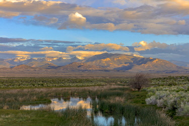 US29CHA0033 Snake Mountains reflecting into wetlands of Great Basin National Park, Nevada, USA