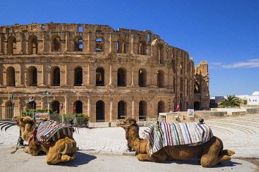 TU02102 Tunisia, El Jem, Camels in front of Roman Amphitheatre