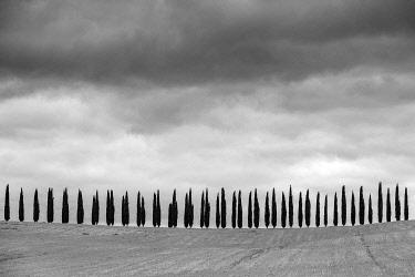 ITA14661AW Rows of cypress trees at Agritourismo di Poggio Covili, Castiglione d'Orcia, Val d'Orcia, Tuscany, Italy, Europe.