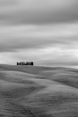 ITA14666AW Tuscan landscape, rolling hills with wheat fields and cypress trees, San Quirico d'Orcia, Val d'Orcia, Tuscany, Italy, Europe.