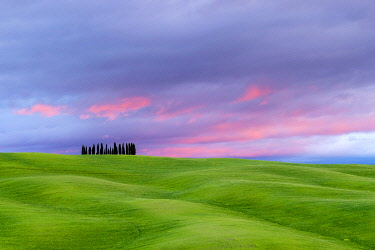 ITA14667AW Tuscan landscape, rolling hills with wheat fields and cypress trees at sunset, San Quirico d'Orcia, Val d'Orcia, Tuscany, Italy, Europe.