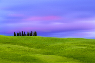 ITA14668AW Tuscan landscape, rolling hills with wheat fields and cypress trees at sunset, San Quirico d'Orcia, Val d'Orcia, Tuscany, Italy, Europe.