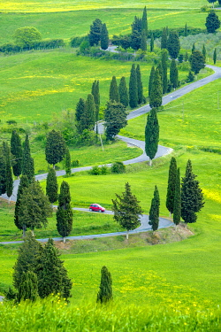 ITA14670AW Tuscan landscape, winding road lined with cyprus trees near Monticchiello, Val d'Orcia, Tuscany, Italy, Europe.