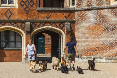 TPX70957 England, Berkshire, Eton, Professional Dog Walkers Walking Group of Dogs