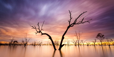 AUS3220AW Dead tree on Menindee Lakes, Far West, New South Wales, Australia