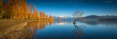 NZ9358AW Lone Wanaka Tree. Lake Wanaka, Otago, South Island, New Zealand
