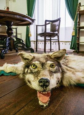 SLV1535AW Wolf Carpet, Castle in Stara Lubovna, interior, Presov Region, Slovakia