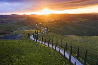 ITA14816AW An aerial view of a tree lined avenue that winds towards a Tuscan farmhouse, Valdorcia, Siena, Tuscany, Italy
