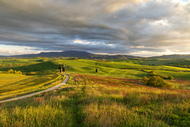 ITA14815AW Winding road and cypress trees in the Val d'Orcia, Tuscany, Italy